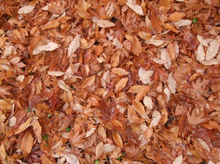 Fallen leaves No.2 -8
