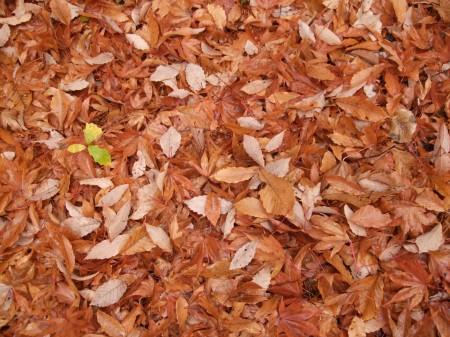 Fallen leaves No.2 -7