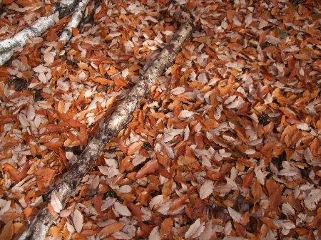Fallen leaves No.2 -5
