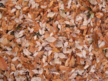 Fallen leaves No.2 -2