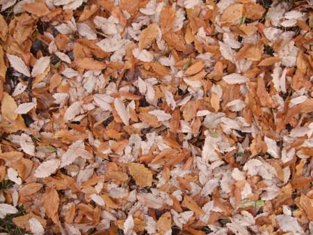 Fallen leaves No.2 -1