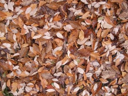 Fallen leaves No.2 -3