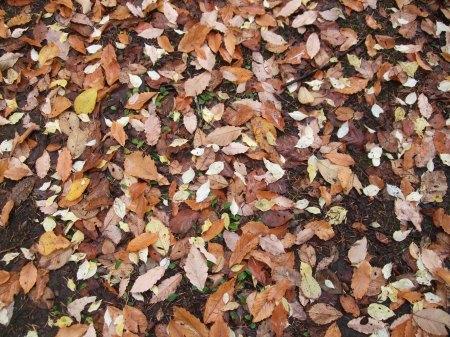Fallen leaves No.2 -4