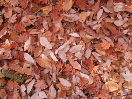Fallen leaves No.2 -9